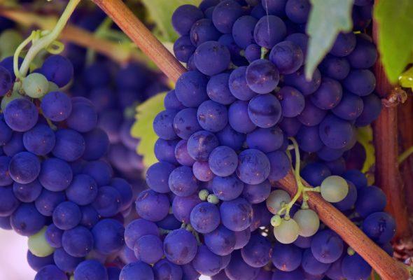 Seedless Fruit Pose as Healthy but Hazardous
